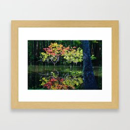 Autumn In The Swamp Framed Art Print