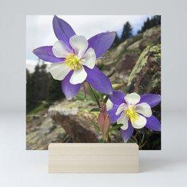 Watercolor Flower Columbine 08, Fall River Road, Rocky Mountain National Park, CO Mini Art Print