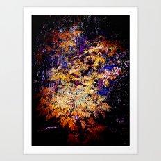 Wild Burst Art Print