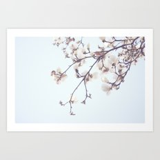 Magnolias Art Print