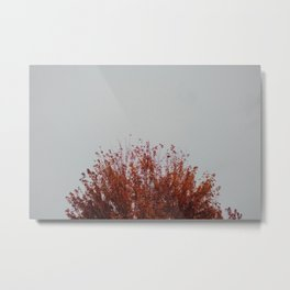 Autumnal Tree Metal Print