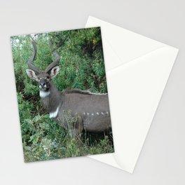 Male Mountain Nyala Antelope Bala Mountains Ethiopia Stationery Cards