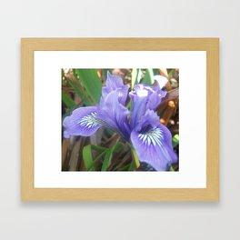 Pretty Purple Iris Framed Art Print