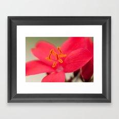 Pastel Flower 196 Framed Art Print