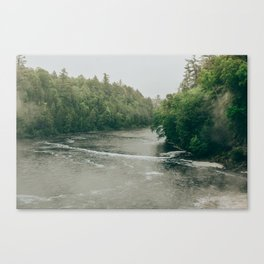 Poetry of a Northern Forest Canvas Print