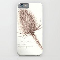 Wild Teasel botanical poster Slim Case iPhone 6s