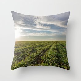 Wheat seedlings growing in a field. Young green wheat growing in soil. Throw Pillow