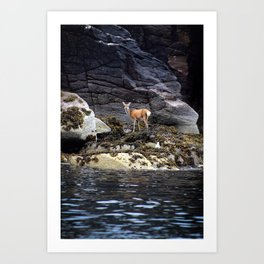 Deer by the Sea  Art Print
