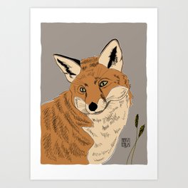 """""""Interested Fox"""" a red fox sees something curious in summer fog Art Print"""