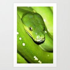 Green Python Portrait 3 Art Print