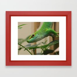 Madagascar Giant Day Gecko Framed Art Print