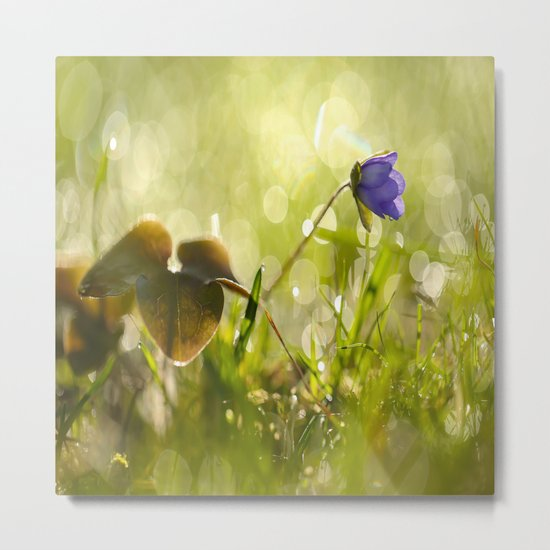 Beautiful spring - first flower little anemone with beautiful bokeh in green background Metal Print