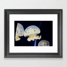 Vain Jellyfish Framed Art Print