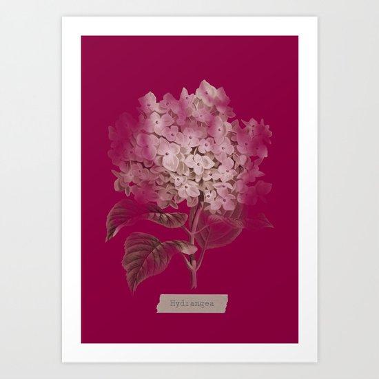 HYDRANGEA 2 Art Print