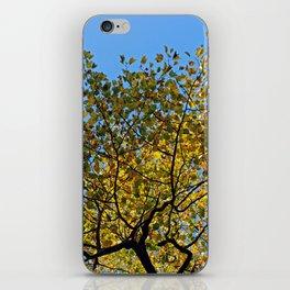 Tulip Tree in the Autumn iPhone Skin