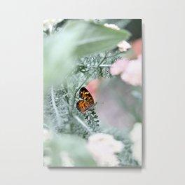 Butterfly Flutter Metal Print