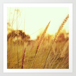 Sunlit Fountain Grass Photograph Art Print