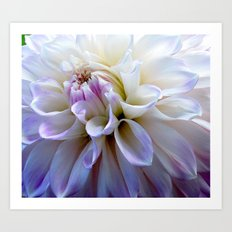 Dahlia closeup Art Print