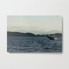Scenic Whale Photography Print Metal Print