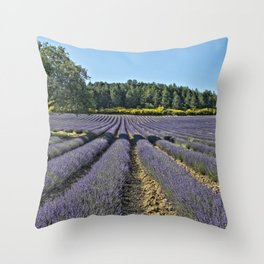 Lavender fields, Provence, France Throw Pillow