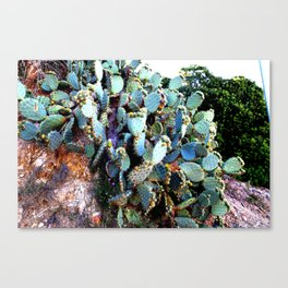 Invasion of colorful Cactus green blue red Canvas Print