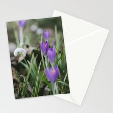 Spring Crocus flowers growing among Snowdrops. Norfolk, UK. Stationery Cards