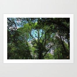Woodland Canopy II Art Print