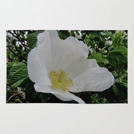 Wild White Rose in Full Bloom Rug