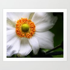 A white summer flower with an orange center Art Print