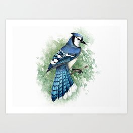 Blue Jay In Watercolor Art Print