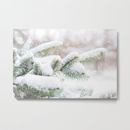 Winter Evergreen Metal Print