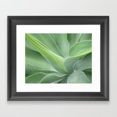 Green Agave Attenuata Framed Art Print