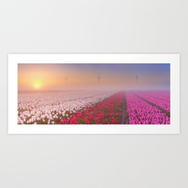 II - Sunrise and fog over rows of blooming tulips, The Netherlands Art Print