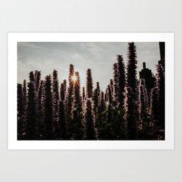 Dutch flower field at sunset | Colourful Travel Photography | Hoge Veluwe, Holland (The Netherlands) Art Print