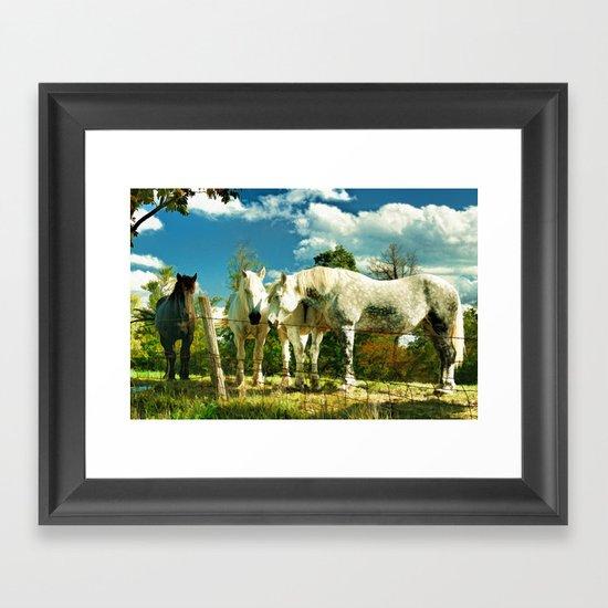 Amish work horses Framed Art Print