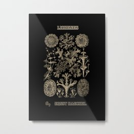 """Lichenes"" from ""Art Forms of Nature"" by Ernst Haeckel Metal Print"