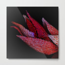 Moss Rosette Metal Print