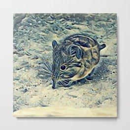 elephant shrew (Macroscelididae) Metal Print