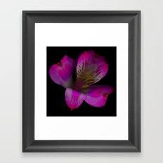 Flower 8 Framed Art Print