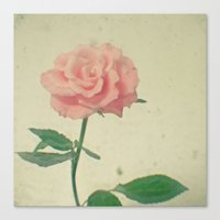 blush Canvas Prints featuring Blush by Cassia Beck