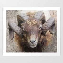 the sheep's horns Art Print