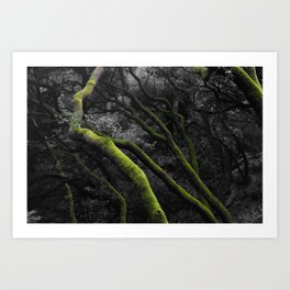 Mossy Bay Trees in Selective Black and White Art Print
