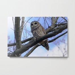 Owl for Patricia Metal Print