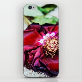 Wilted Rose iPhone Skin
