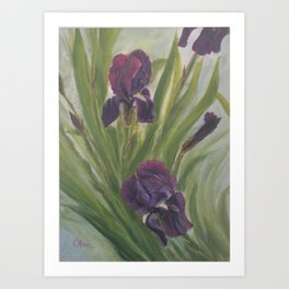 Winter Iris Art Print