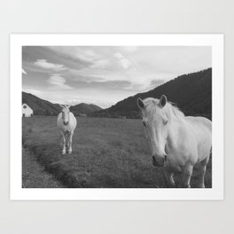 Happy White Horses - Black and White - Sun Valley, Idaho Art Print