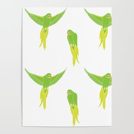 Wild Parrots of East Austin Poster