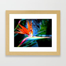 The Bird and the Bee Framed Art Print