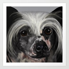 Chinese Crested Up Close Art Print