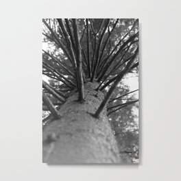 tree black and white photo Metal Print